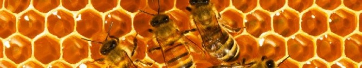 Miere de albine din Bucovina