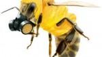 albina cu masca